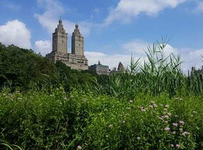 Nature in Central Park with San Remo in the background